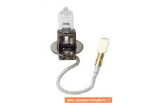 Halogen lamps 12V - H3 - 55W